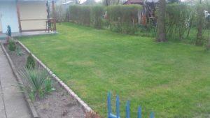 Trawnik po wiosennym liftingu :)